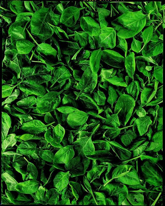 listový špenát