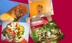 děti barvy a zvířátka koláž