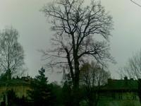 Likvidace dřevin Liberec