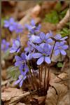 Jaterníky = jaro a s ním překlady anotací :-)