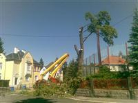 Kácení stromů a prořez dřevin