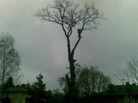 Kácení stromů Jablonec nad Nisou