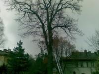 Kácení stromů Liberec